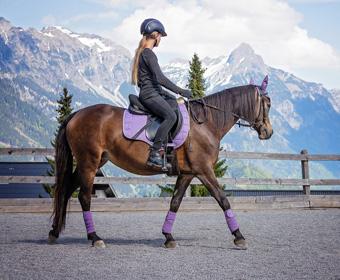 blurbs-materiales-guia-de-caballo-equestre-conduccion-actividades-guia-en-el-medio-natural-teco-tafad-santander-tafad-cantabria-san-agustin